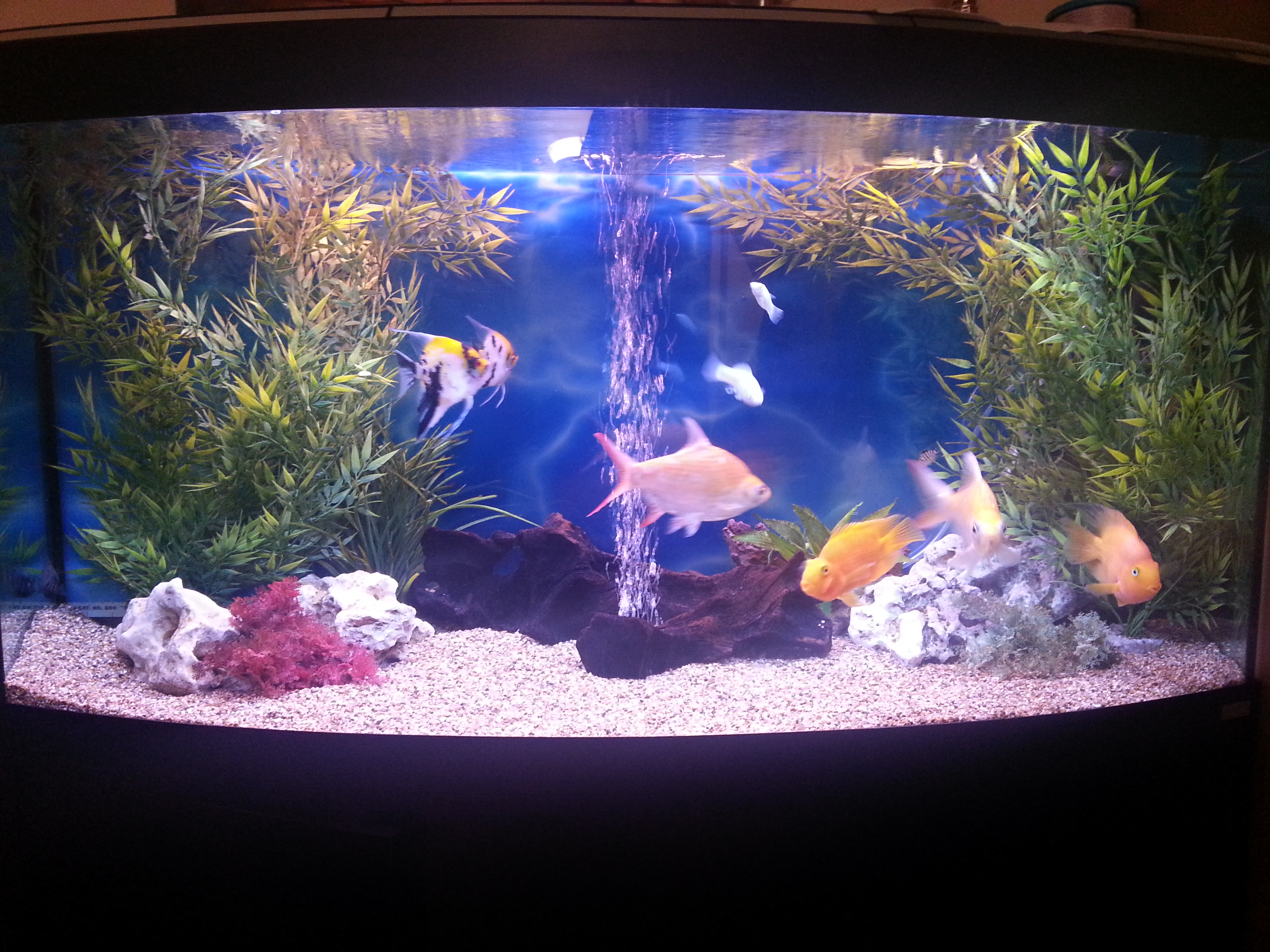 Gallery mr aquarium for Google fish tank mrdoob