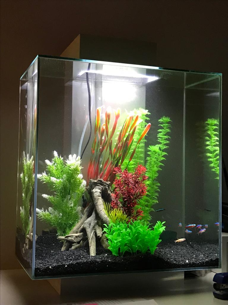 Small office aquarium. Perfect size for when you can't do without one but haven't got the room.