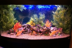 Large Aquarium Planed With Sydeco silk Plants