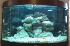 Newly setup Malawi aquarium at a customers house.