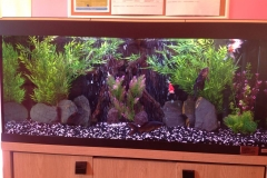 Roma 240 Goldfish Aquarium in A Child Day Care Center
