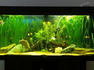 Aquarium Maintenance and Setup Manchester