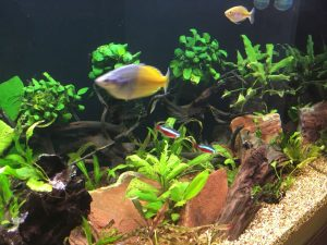 Read this before buying a new aquarium | Don't commit before reading this