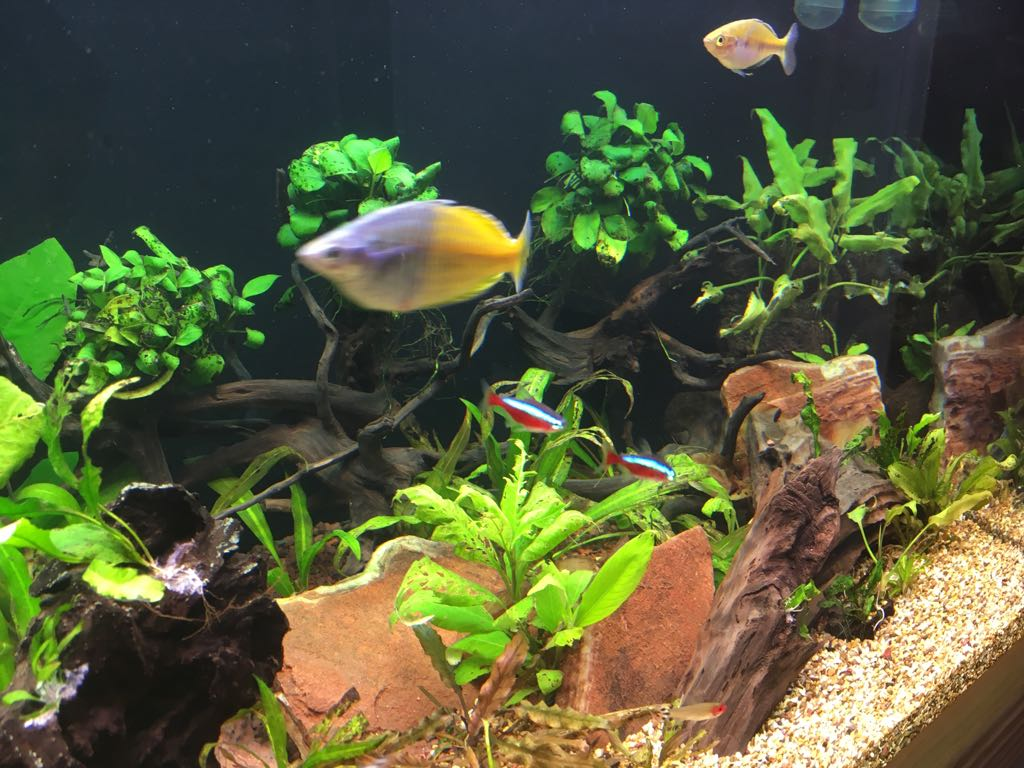 Read this before buying a new aquarium   Don't commit before reading this